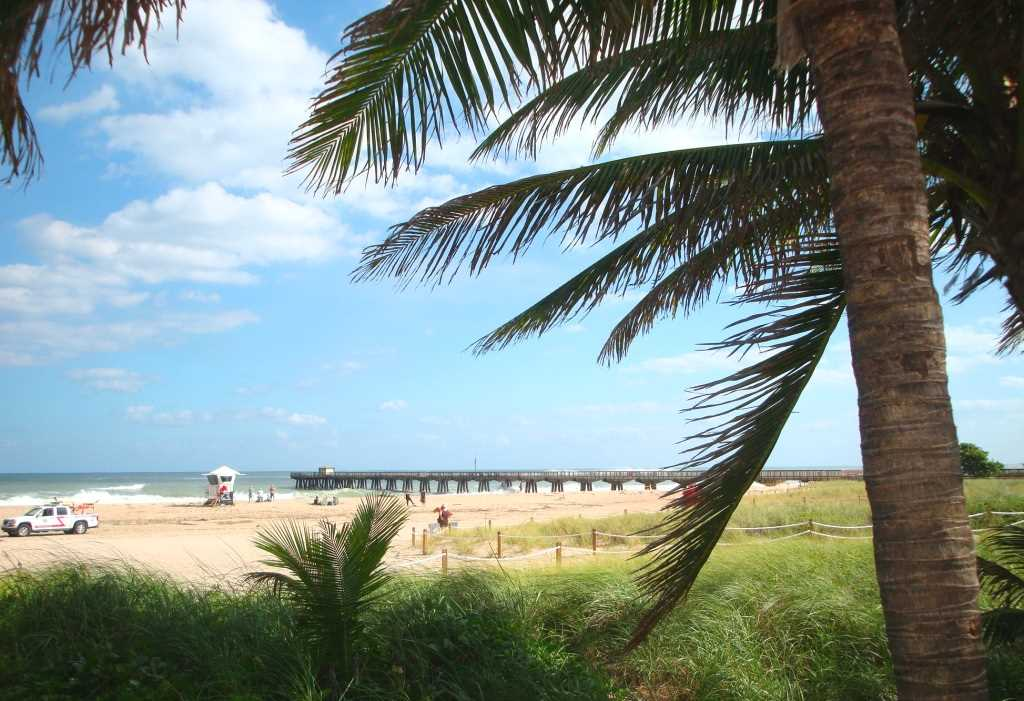 Swaying palms and seagrass dunes line the beach.